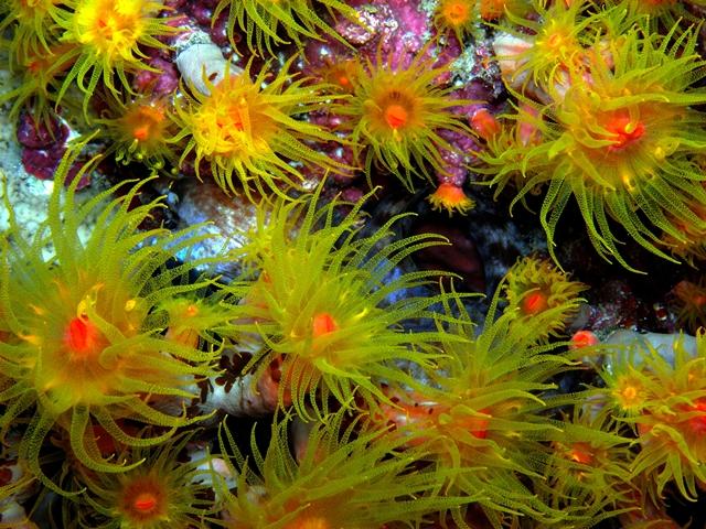 Barevný podmořský svět. Foto: Martina Balzarová