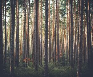 Lidé a stromy