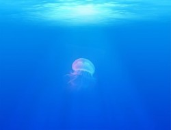 rsz_jellyfish-698521_640