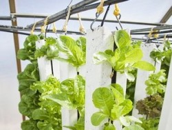vertical-farm-