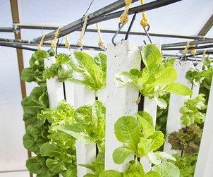 vertical-farm-