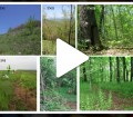 VIDEO_drobne_organismy kopie