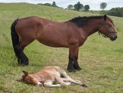 horse and offspring