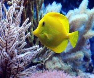 coral fish